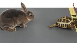 broke and need money fast - Tortoise vs The Hare